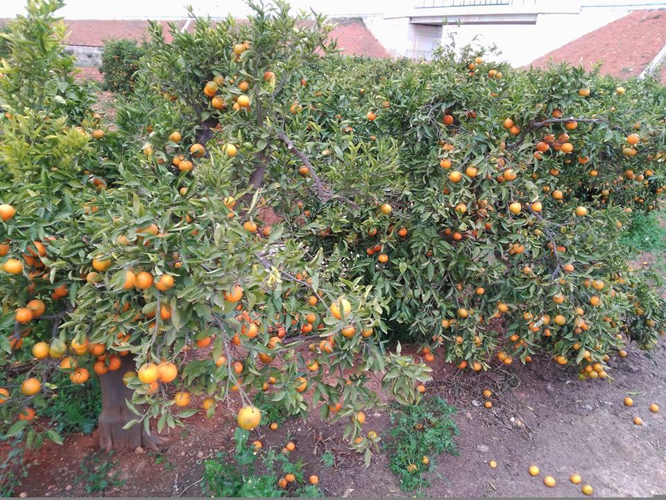 naranjas-ruina