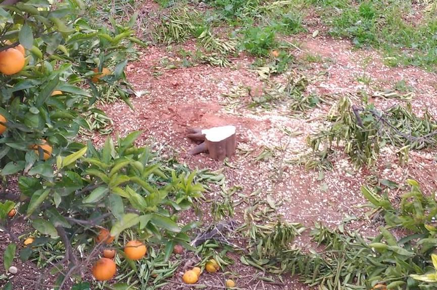 naranjas-ruina2